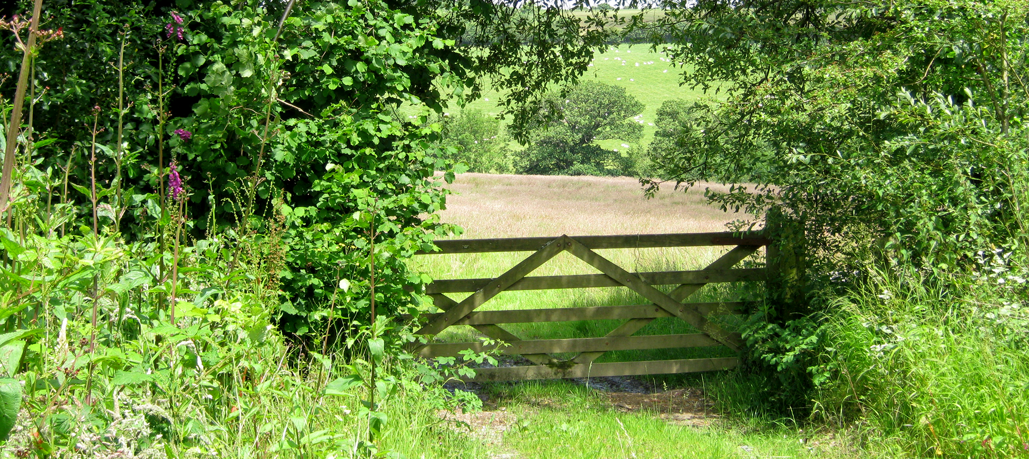 Horse accommodation, Tawstock, near Barnstaple, in North Devon